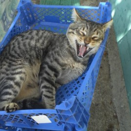 Astypalaia_&_cats_00