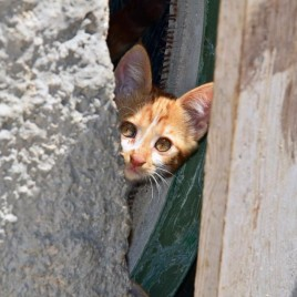 astypalaia_&_cats_01