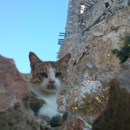 Astypalaia_&_cats_02