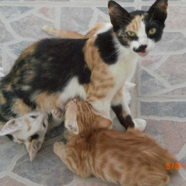 Astypalaia_&_cats_03