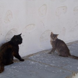 Astypalaia_&_cats_05
