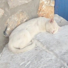 Astypalaia_&_cats_06