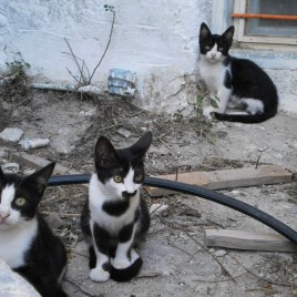 Astypalaia_&_cats_07